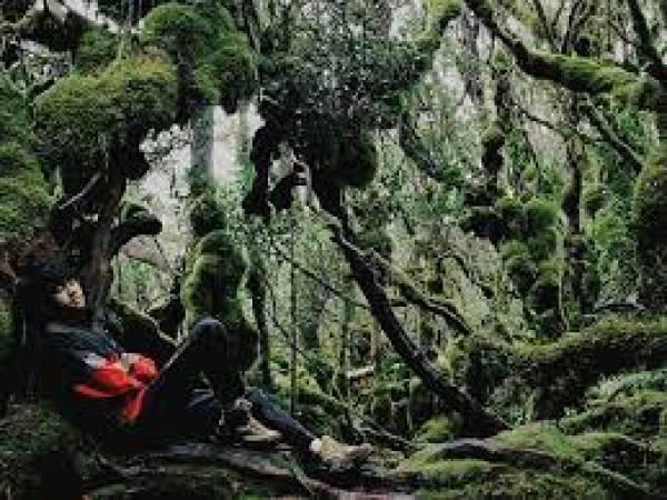 Sensasi Liburan Penuh Ketenangan di Hutan-Hutan Estetis Jawa Timur